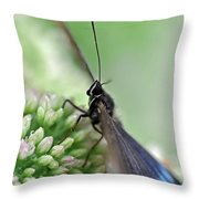 Blue Butterfly On Sedum Throw Pillow
