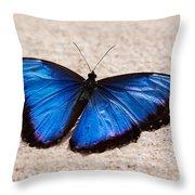 Blue Buttterfly Throw Pillow