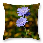 Blue Chicory 2 Throw Pillow