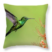 Blue Chinned Sapphire Throw Pillow