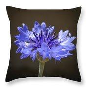 Blue Cornflower Throw Pillow