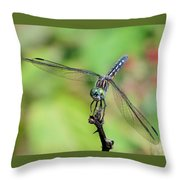 Blue Dasher Dragonfly On A Branch Throw Pillow