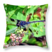 Blue Dasher Throw Pillow