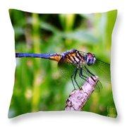 Male Blue Dasher 1 Throw Pillow