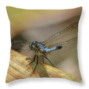 Blue Dasher On Old Leaf Throw Pillow