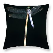 Blue Dragon On Stem Throw Pillow