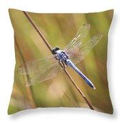 Blue Dragonfly Against Green Grass Throw Pillow
