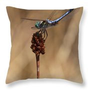 Blue Dragonfly On Brown Reed Throw Pillow