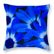 Blue Daisies, Medford Oregon Throw Pillow