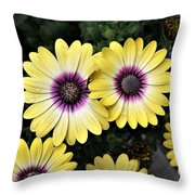 Blue Eyed Beauty African Daisy Throw Pillow