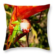 Blue Eyed Grasshopper 2 Throw Pillow