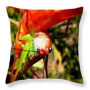 Blue Eyed Grasshopper 2 Throw Pillow