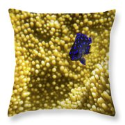 Blue Fish In Coral Throw Pillow