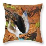Blue-footed Boobie Display Throw Pillow