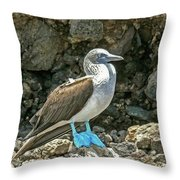 Blue Footed Boobie Throw Pillow