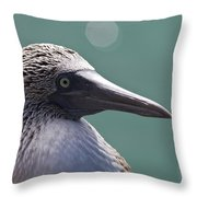 Blue Footed Booby II Throw Pillow