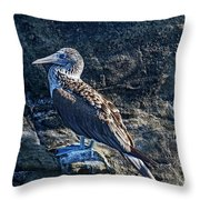 Blue-footed Booby Prize Throw Pillow