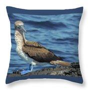 Blue-footed Booby  Puerto Egas James Bay Santiago James Island Galapagos Islands Throw Pillow