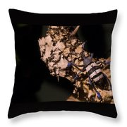 Blue Footed Weevil Throw Pillow