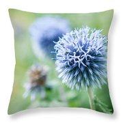 Blue Globe Thistle Flower Throw Pillow