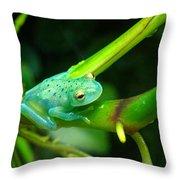Blue-green Tropical Frog Throw Pillow