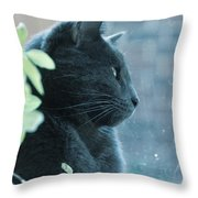 Blue Grey Contemplating Cat Throw Pillow