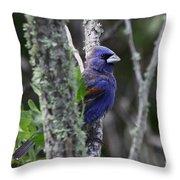 Blue Grosbeak In A Mangrove Throw Pillow