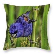 Blue Grosbeak On A Reed Throw Pillow