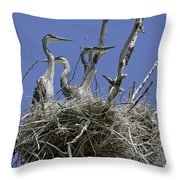 Blue Heron 36 Throw Pillow by Roger Snyder