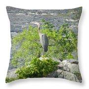 Blue Herring Bird  Throw Pillow