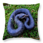 Blue Hognose Throw Pillow