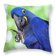 Blue Hyacinth Macaw Throw Pillow