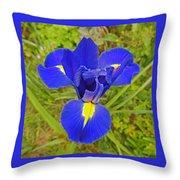 Blue Iris Beauty Throw Pillow