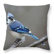 Blue Jay 2 Throw Pillow