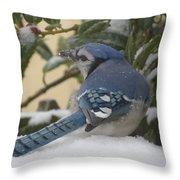 Blue Jay Beauty Throw Pillow