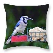 Blue Jay - Cyanocitta Cristata  Throw Pillow