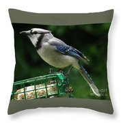 Blue Jay Day Throw Pillow