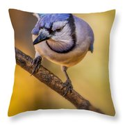 Blue Jay In Golden Light Throw Pillow