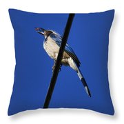 Blue Jay Meal Time Throw Pillow