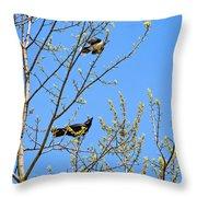 Blue Jay Mobbing A Crow Throw Pillow