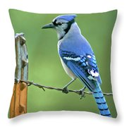 Blue Jay On The Fence Throw Pillow