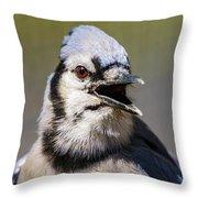 Blue Jay Portrait Throw Pillow