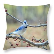 Blue Jay Poses In Crab Apple Tree Throw Pillow
