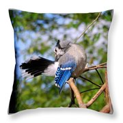 Blue Jay Preening Throw Pillow