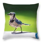 Blue Jay Walk Throw Pillow