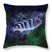 Blue Kenyi Cichlid Throw Pillow