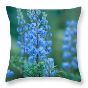 Blue Lupine In The Tetons  Throw Pillow
