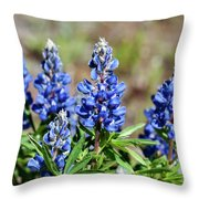 Blue Lupines Throw Pillow