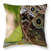 Blue Morpho Butterfly Morpho Peleides  Throw Pillow