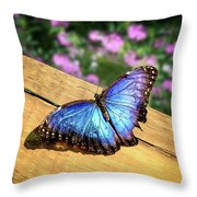 Blue Morpho Butterfly On A Wooden Board Throw Pillow